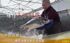 [致富经]黑龙江黑河时煜来养殖鲟鱼创造千万财富