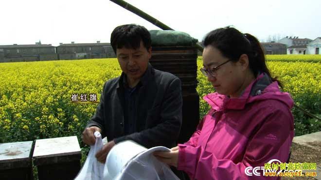 [致富经]稀罕的蜂蜜 安徽芜湖崔红旗养蜂说赚就赚