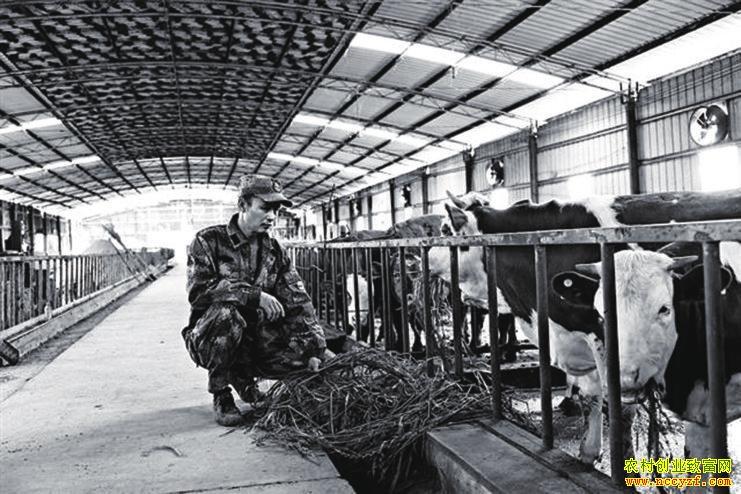 重庆綦江付尤松种草养牛 循环发展效益高