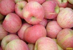 苹果价格上涨一倍 未来苹果价格走势如何?