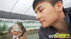 [致富经]湖南岳阳90后小伙肖勇养殖牛蛙月卖百万元