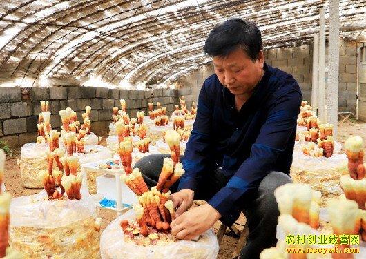 山东平阴县姜广青嫁接灵芝做盆景效益高