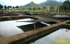 四川泸州退役军人朱月华、周海涛回乡创业养鱼带富一方百姓