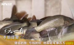 [致富经]四川成都付正康养殖草鱼年赚百万元