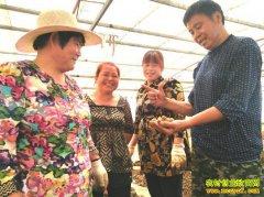 小小水蛭蛋 卖出好价钱 山东郯城陈敬伟养殖水蛭效益高