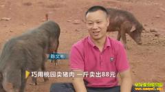 [致富经]湖南祁东县陈文彬巧用桃园卖猪肉一斤卖出88元