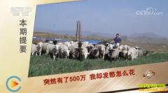 [致富经]河北张家口兰进京悟出创业门道养羊发羊财