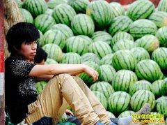 西瓜扎堆上市价格大幅下跌 建议瓜农尽早出售