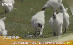 [致富经]内蒙古陈建钧养乌鸡卖出百万财富