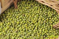 绿豆价格维持稳定 经销商不必急于出货
