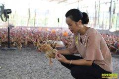 广西桂平90后女大学生陆兰娟返乡创业养鸡