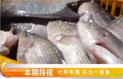 [致富经]七年布局 广东珠海朱继荣只为养殖鲈鱼