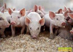 生猪价格趋稳 专家建议做好疫病防控,切勿盲目压栏