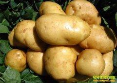 货多价低买得少 马铃薯价格走低建议农户随行就市