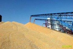 9月份小麦价格还能上涨吗?