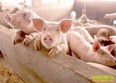 猪肉供应有保障 预计明年猪肉价格逐步回落
