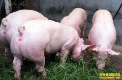 这样养猪,国家最高补助500万元!