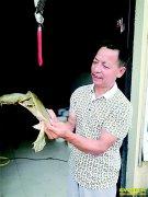 浙江衢州张益平跨界创业养殖甲鱼年产值700多万元