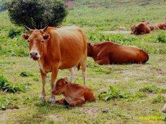 牛羊肉价一路涨 扩大养殖规模正逢其时
