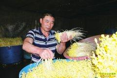 四川泸州李美海种植豆芽发家致富