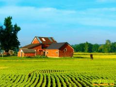 国家为什么给政策鼓励发展家庭农场?