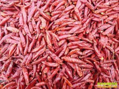 辣椒多少钱一斤?12月27日主产区辣椒价格行情