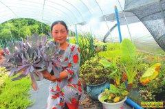 四川泸州返乡农家女姚华莲盆栽花卉年入30多万