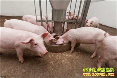 猪价预测来了!2020年下半年生猪价格或迎来向下拐点