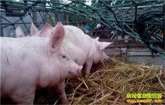 冬季肉猪饲养管理需要注意什么,你清楚吗?