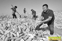 山东桓台大学生李海林种粮食年均利润200万元以上