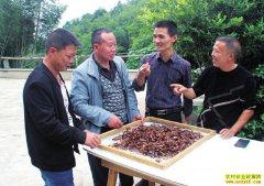 四川长宁:特色养殖铺就绿色致富路