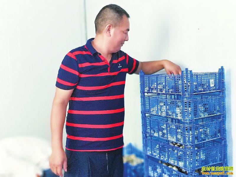四川泸县专业合作社种草菇热销川渝市场