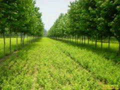2020年种植苗木赚钱吗?明年绿化苗木发展行情如何?