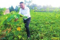 四川泸州:油桐树下巧套种 一地三收效益好