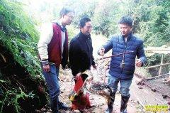 四川泸州陈明元返乡创业山林养土鸭一年10万元