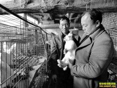 养兔子赚钱吗?投资少增收快,甘肃临泽县养兔致富经