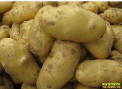 2020年1月7日批发市场土豆价格行情