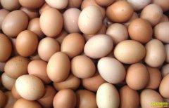鸡蛋价格两月大跌近30%,2020年鸡蛋价格会一蹶不振吗?