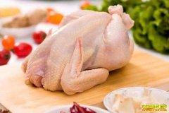 2020年春节前鸡肉价格走势怎样?