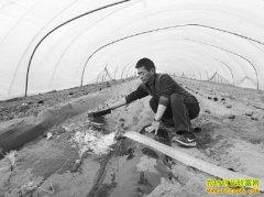山东泗水徐德曾韭菜和西瓜倒茬种植经济效益高