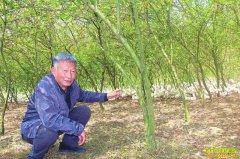 四川泸州吴元辉桑园养鹅 混合种养效益好