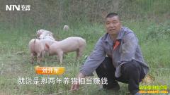 [致富经]湖北丹江口刘开军养猪一只手撑起财富人生