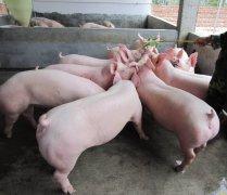 """2020年7月起生猪收购贩运开始""""实名认证"""""""