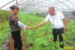 循环轮作,四川泸州朱德琳1亩蔬菜地种出2亩效益