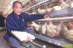 四川泸州六旬老汉邓云金养殖蛋鸡年均获利 6 万多