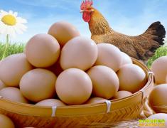 鸡蛋多少钱一斤?2021年2月25日全国鸡蛋价格