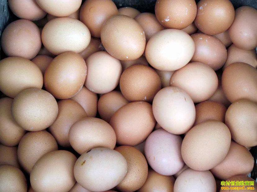 3月鸡蛋价格或先跌后稳