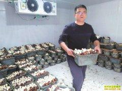 四川三台县王菠菌稻轮作效益高 亩产值3万元