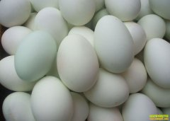 鸭蛋多少钱一斤?2021年4月13日全国鸭蛋价格