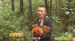 致富经:云南曲靖倔强男人宋长胜养硬骨头的鸡